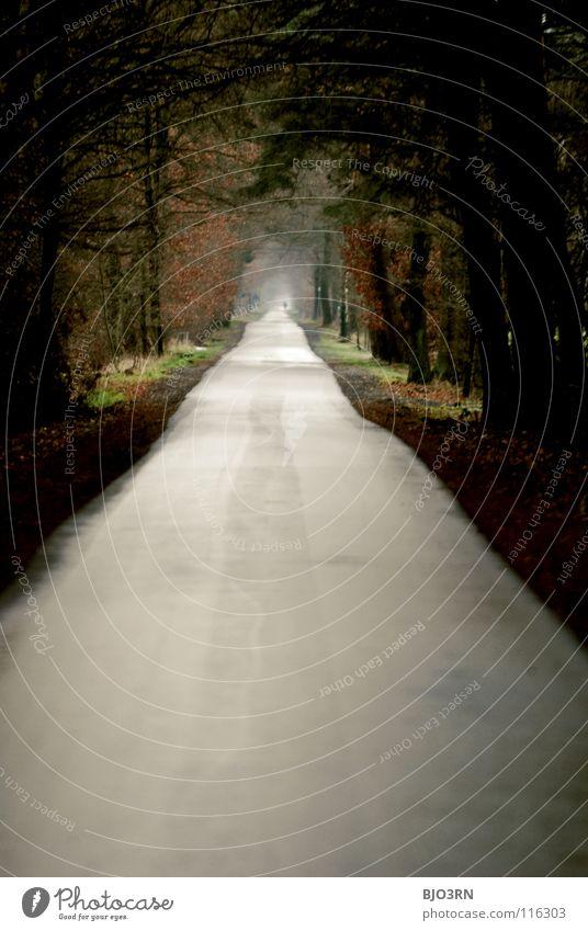 path = destination Long Winter Autumn Gloomy Far-off places Tunnel Pedestrian Lanes & trails Edge darkening tele To go for a walk