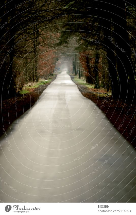Winter Far-off places Autumn Lanes & trails Gloomy To go for a walk Long Tunnel Pedestrian