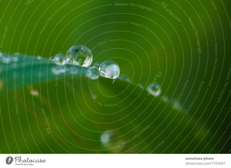 tears of nature Plant Drops of water Spring Rain Grass Leaf Garden Meadow Wet Green Nature Colour photo Exterior shot Close-up Detail Macro (Extreme close-up)