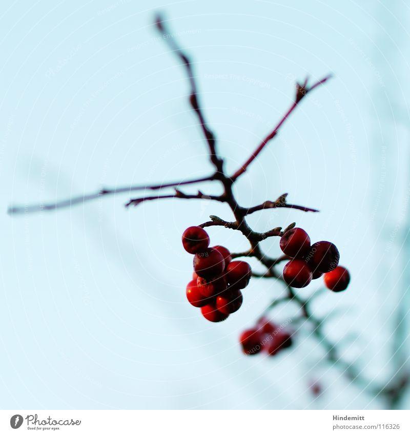 Sky Beautiful Blue Red Plant Winter Calm Life Dark Nutrition Autumn Think Bright Brown Food Bird