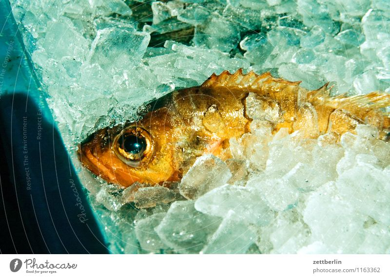 fish Fish Ice Conserve Canned Cold Nutrition Fish shop Fisherman Fresh Fishery Gastronomy Eyes Scales Fin Lie Sell Salmon