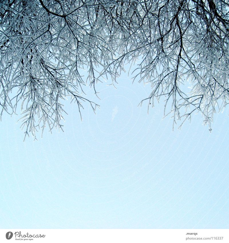 Sky Tree Blue Winter Cold Snow Ice Bright Fresh Clarity Branch Twig