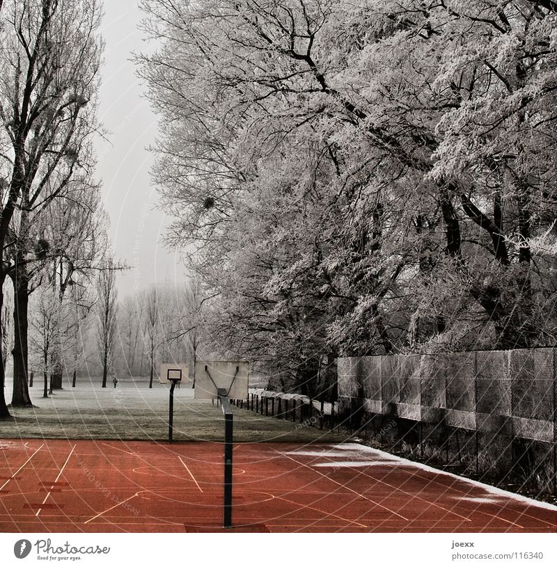 Tree Red Winter Loneliness Snow Playing Park Landscape Empty Places Frost Leisure and hobbies Fence Share Avenue Basket