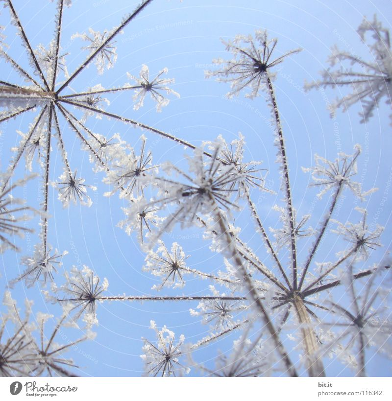 HAPPY NEW FLOWERS Beautiful Winter Snow Sky Cloudless sky Beautiful weather Ice Frost Flower Cold Blue White Ice crystal Frozen Fairytale landscape Delicate