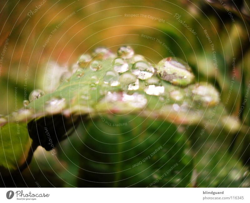 Green Water Leaf Environment Life Small Lamp Pink Rain Glittering Weather Fresh Drops of water Large Climate Wet
