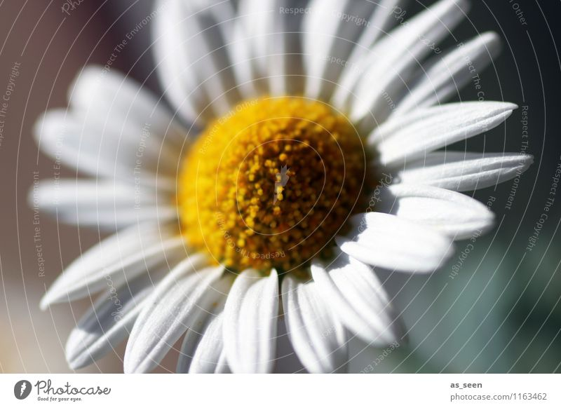 Nature Plant Green Colour White Summer Flower Environment Yellow Life Blossom Spring Meadow Garden Bright Lifestyle