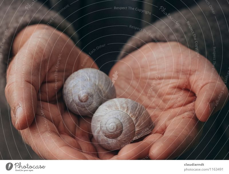 treasures Human being Masculine Man Adults Hand 1 Plant Wild animal Snail Vineyard snail Large garden snail shell 2 Animal Pair of animals Slimy Beautiful Brown