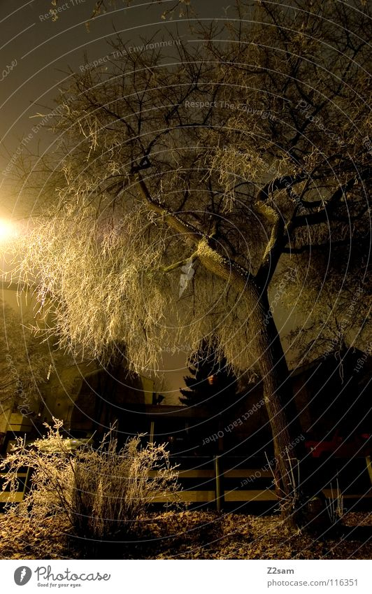 nocturnal Night Dark Tree Light Exposure Long exposure Stand Black Transparent Bushes Street lighting Lantern Yellow Frozen Winter Cold 2 Hoar frost Creepy