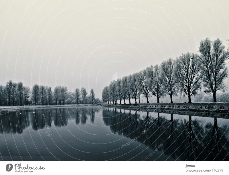 Peace and Power Avenue Row of trees Clouds Loneliness Relaxation Cold Mystic Love of nature Poplar Promenade Calm Lake Smoothness Reflection Animal Gloomy