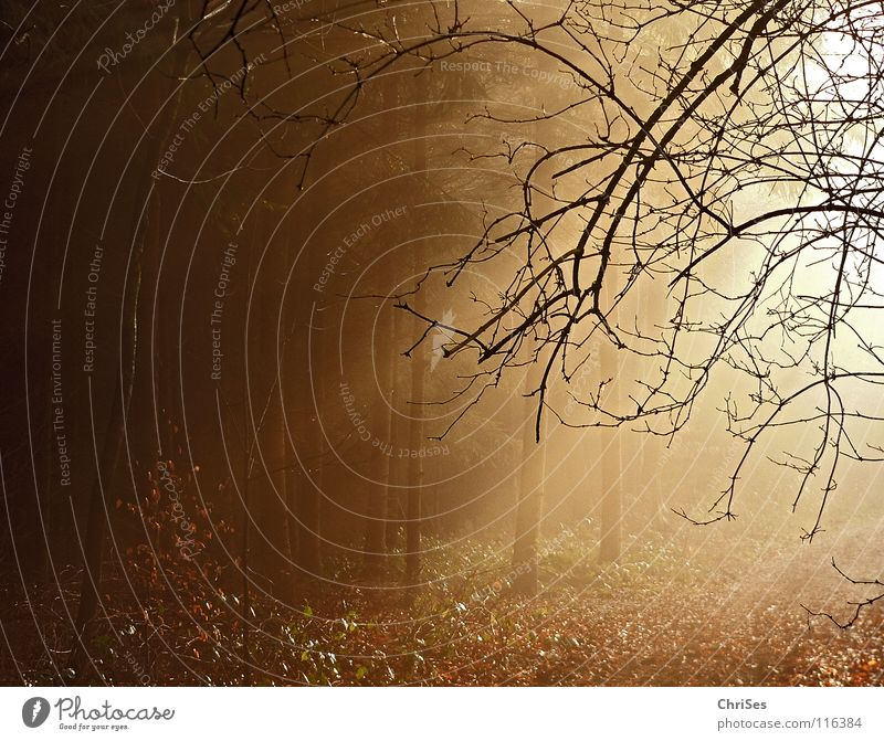 A new year is dawning... Fog Morning Sunrise Winter Autumn Physics Cute Leaf Black Brown Tree Forest Tunnel Romance Northern Forest