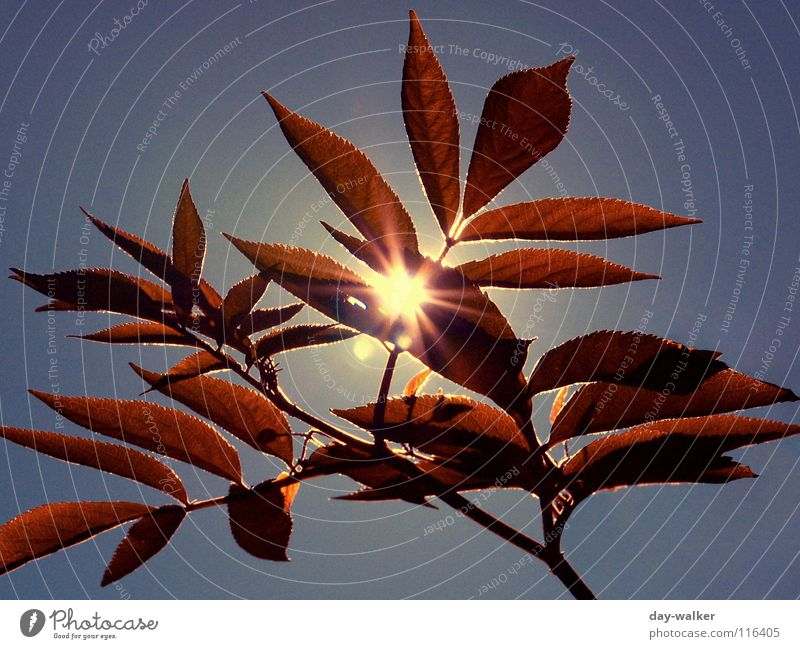 Summerfeelings II Moody Character Relaxation Leaf Red Back-light Lighting Glimmer Dazzle Sun Nature Freedom Warmth Plant Blue