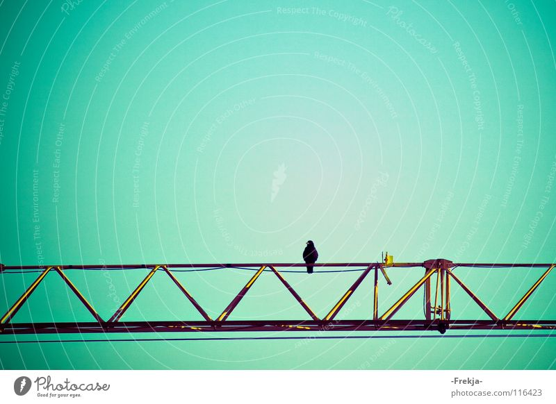Green Blue Loneliness Bird Industry Grief Turquoise Distress Crane