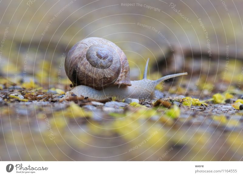 On My Way Nature Animal Traffic infrastructure Public transit Train travel Snail 1 Movement Crawl Slimy Attentive Prompt Caution Serene Patient Calm