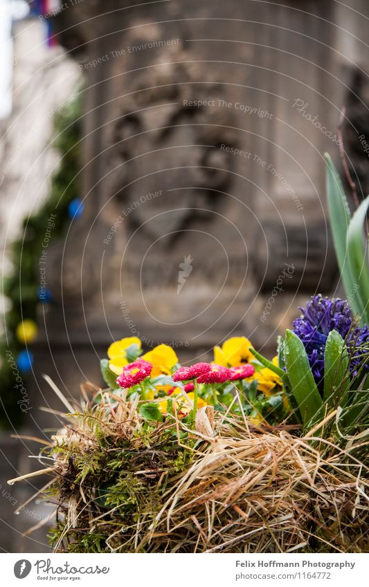 Nature Plant Flower Idyll Europe Well Depth of field Monument Saxony Foliage plant Spring flowering plant Coat of arms Bautzen