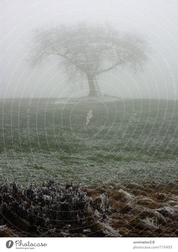 The tree 1 Tree Meadow Snow Fog Landscape Nature Agriculture Loneliness Cold Winter Grief Distress ursinator2.0 Sadness