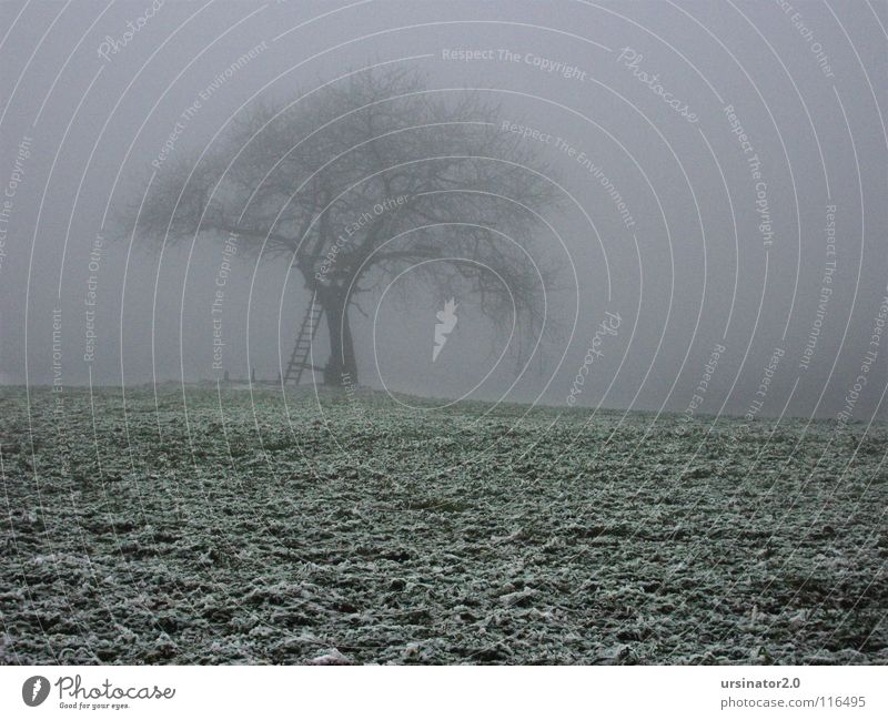 Nature Tree Winter Loneliness Cold Snow Meadow Sadness Landscape Field Grief Agriculture Distress Monochrome