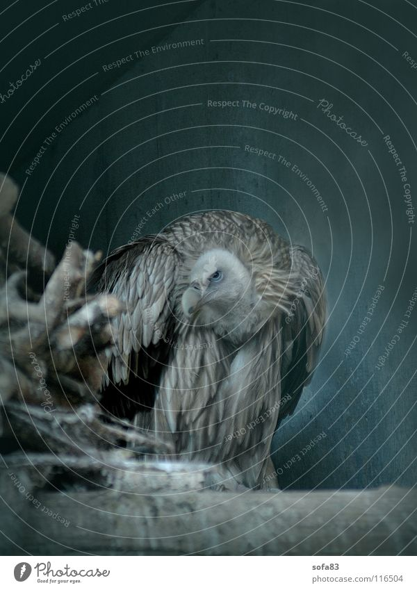 Blue Loneliness Animal Cold Bird Zoo Turquoise Boredom Bird of prey Berlin zoo Vulture