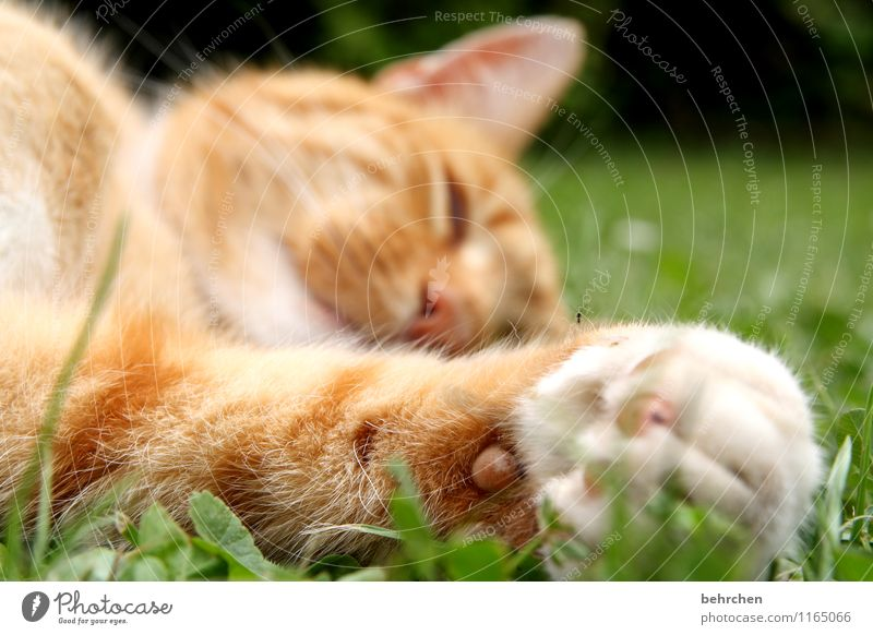 Cat Nature Plant Summer Relaxation Animal Spring Meadow Grass Garden Park Lie To enjoy Beautiful weather Sleep Break