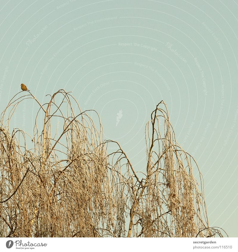 Sky Nature Blue Tree Loneliness Winter Calm Relaxation Far-off places Dark Death Autumn Above Small Sadness Bird