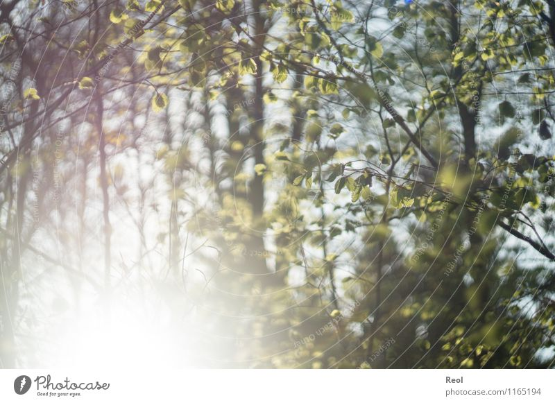 sun-flooded Environment Nature Sun Sunlight Spring Summer Beautiful weather Plant Tree Bushes Foliage plant Wild plant Leaf Leaf green Twigs and branches