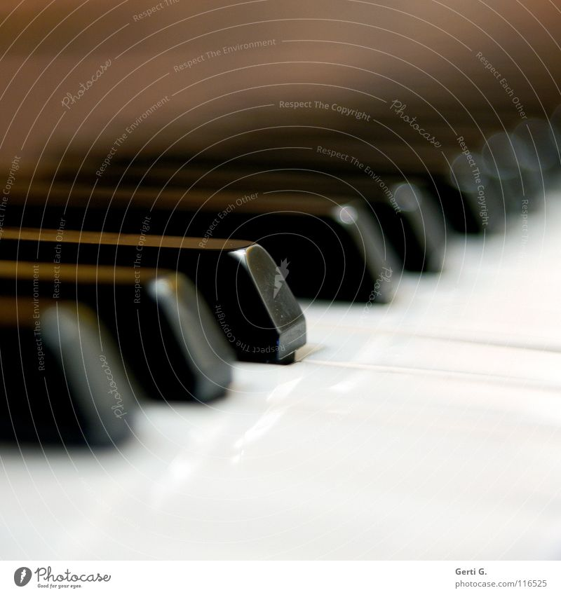 White Black Playing Music Wing Concentrate Keyboard Plastic Piano Depth of field Musical instrument Entertainment Musician Classical Classic Focal point