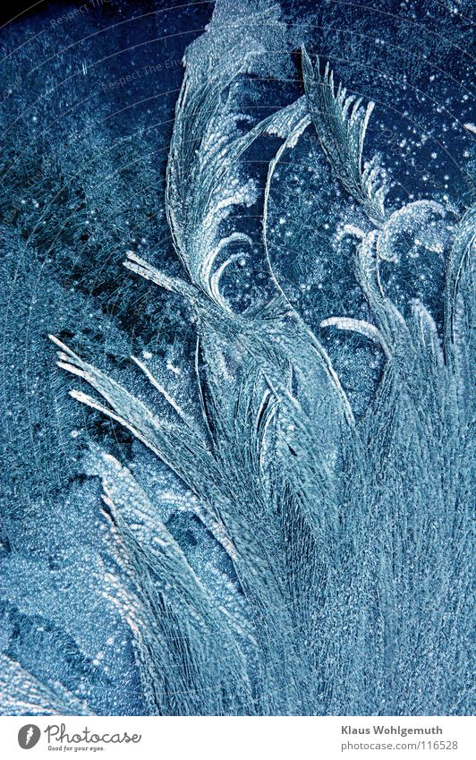 Nature Beautiful White Blue Winter Colour Cold Abstract Ice Frost Window Feather Transience Fantastic Delicate Window pane