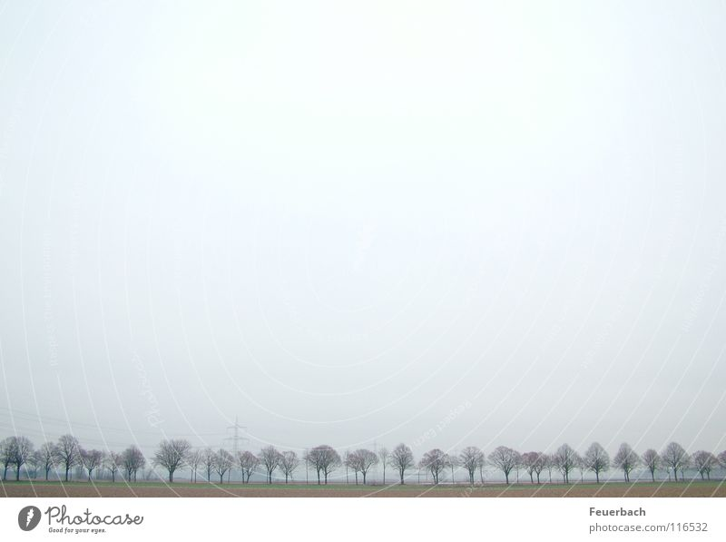 Winter Avenue_2 Snow Sky Horizon Fog Ice Frost Tree Outskirts Traffic infrastructure Street Cold Gloomy Loneliness Niederrhein steamy Landscape Colour photo
