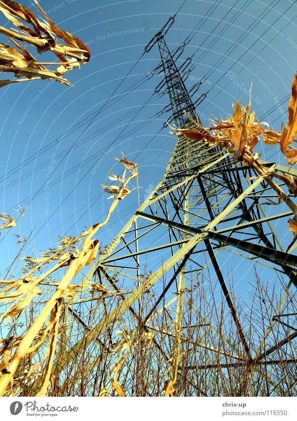 Frog looks at power pole Energy industry Field Maize field Harvest Electricity pylon Wide angle Wood Green Environmental pollution Coal power station