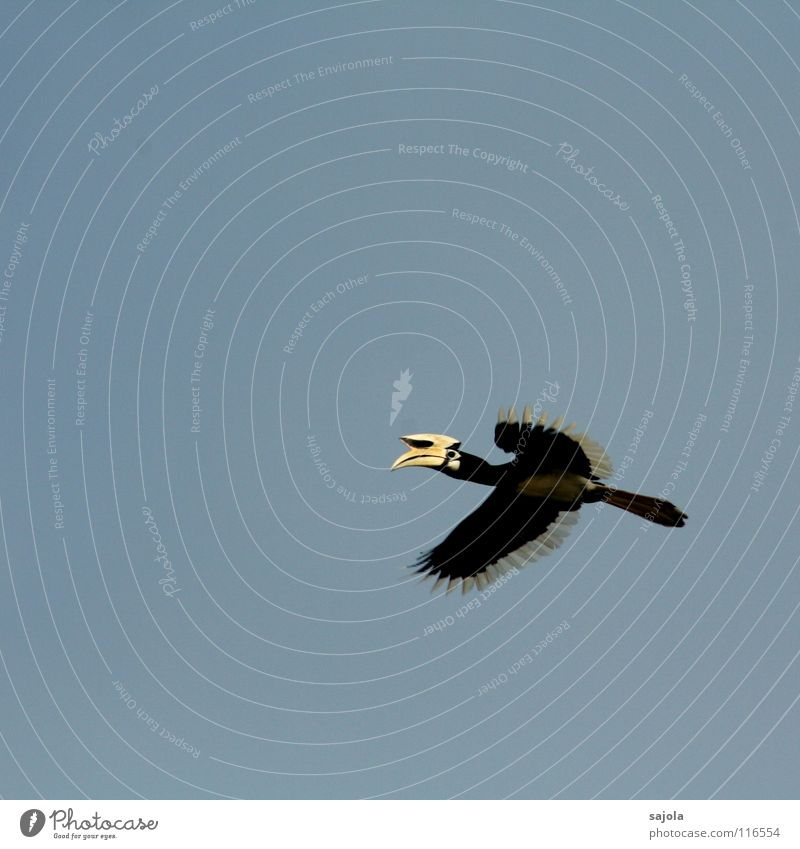 Nature White Animal Black Yellow Eyes Freedom Bird Flying Wild animal Wing Feather Asia Virgin forest Hover
