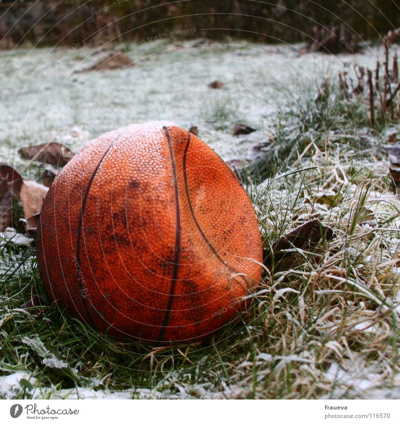 lonely ball 2 Grass Forget Loneliness Winter Round Frozen Leaf Hoar frost Ice Broken Sports Playing Ball sports Basketball Structures and shapes Sphere Line