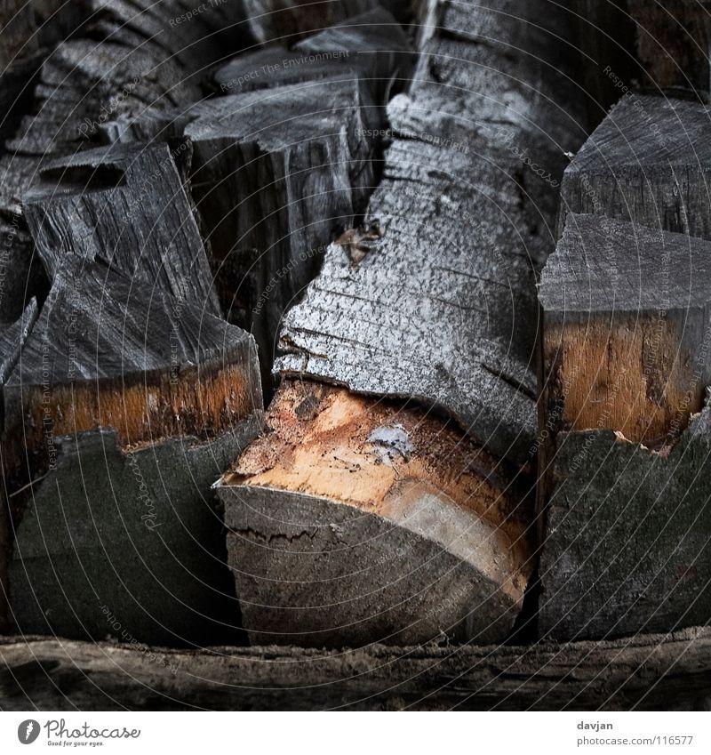 Black Wood Gray Brown Weather Tree trunk Tree bark Thread