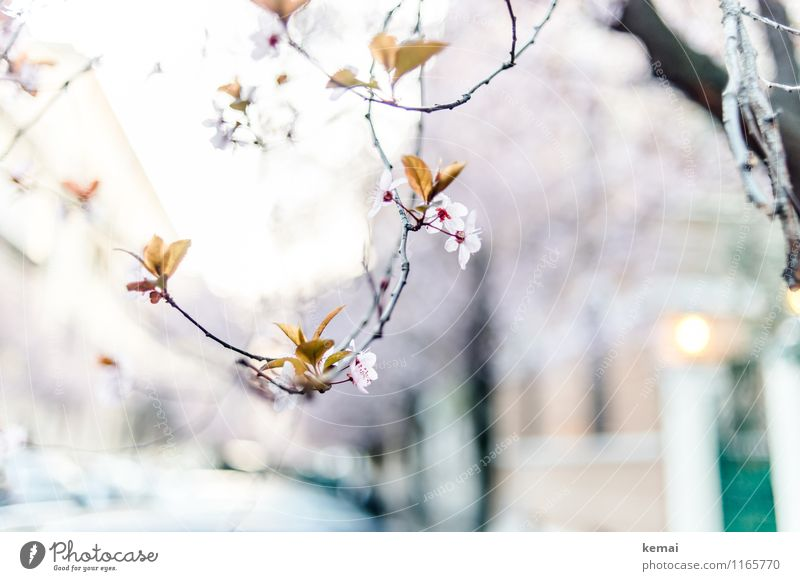 When in Rome: Blossoming streets Environment Nature Landscape Plant Sunlight Spring Beautiful weather Tree Flower Exotic Twig Growth Exceptional Elegant Violet