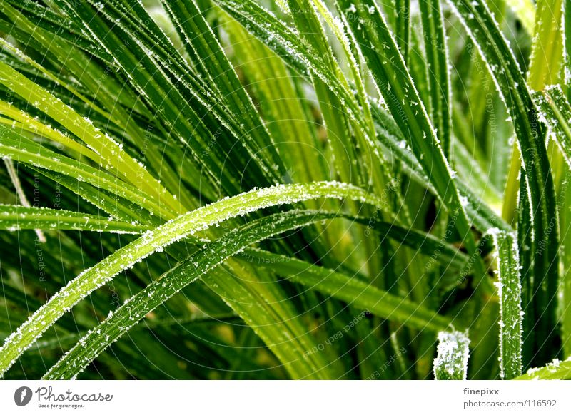 White Green Winter Cold Snow Autumn Meadow Grass Dye Ice Glittering Fresh Frost Lawn Bushes Clarity