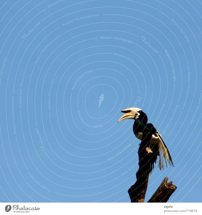 Sky Nature Blue White Animal Black Yellow Eyes Freedom Bird Wild animal Feather Break Asia Virgin forest