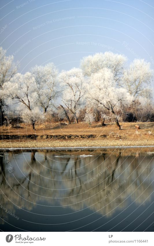 Mures 1 Environment Nature Landscape Elements Earth Air Water Sky Cloudless sky Spring Winter Beautiful weather Ice Frost Snow Tree Forest Coast Lakeside