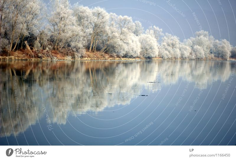 Riverbank Nature Landscape Earth Air Water Cloudless sky Weather Beautiful weather Ice Frost Tree Forest Coast Lakeside River bank Mures River frozen trees