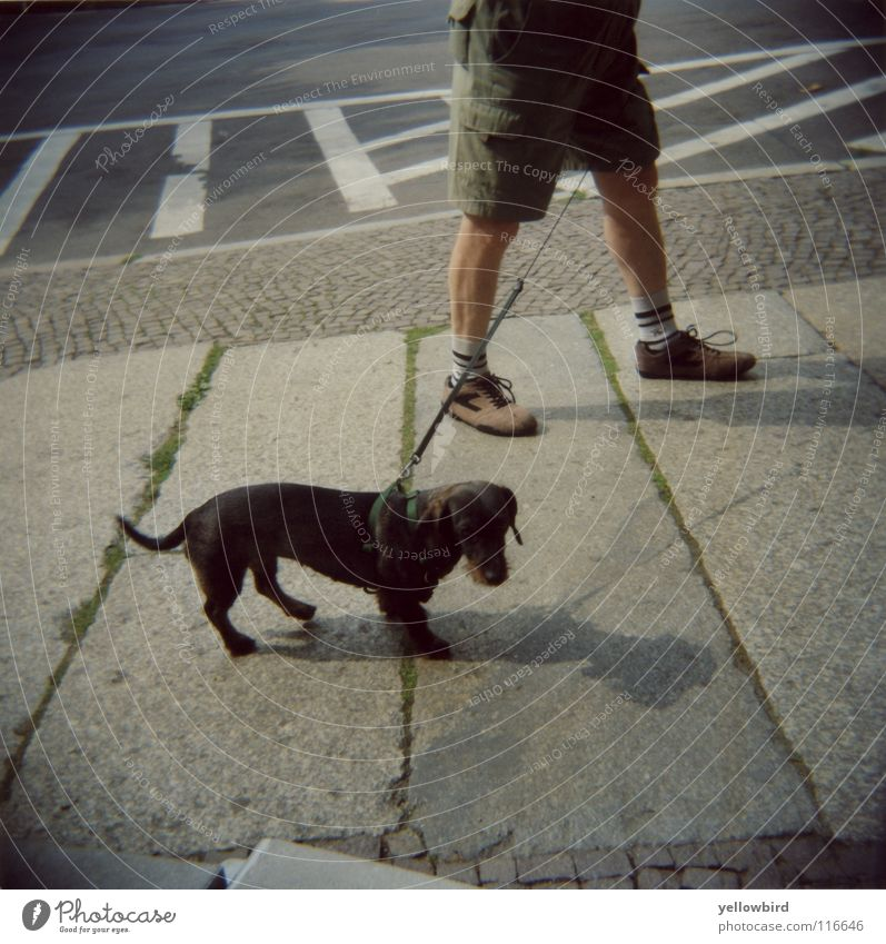 The dog man. Rope Man Adults Traffic infrastructure Street Dog Going Walking Relationship Leipzig Dachshund Mammal To go for a walk Walk the dog Dog lead Holga