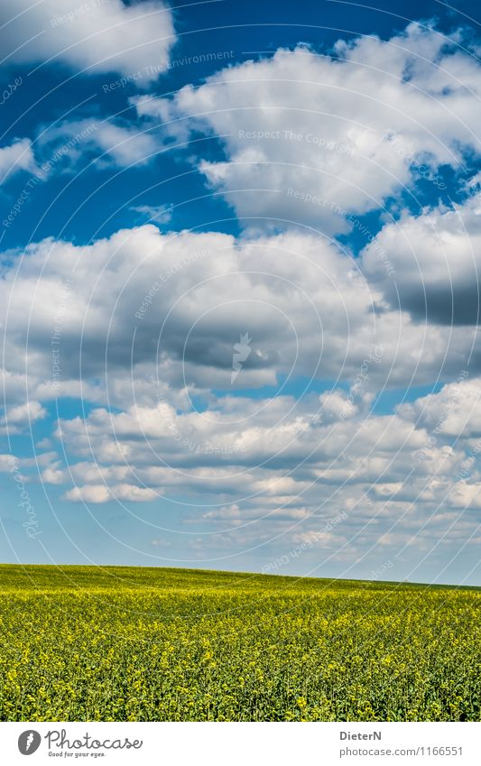 formation Environment Landscape Sky Clouds Beautiful weather Field Blue Yellow White Mecklenburg-Western Pomerania Canola Canola field Colour photo