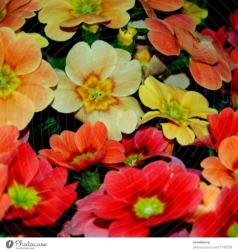 Nature Plant Beautiful Colour Summer Flower Joy Spring Blossom Park Growth Earth Bud Garden Bed (Horticulture) Flourish Flowerbed