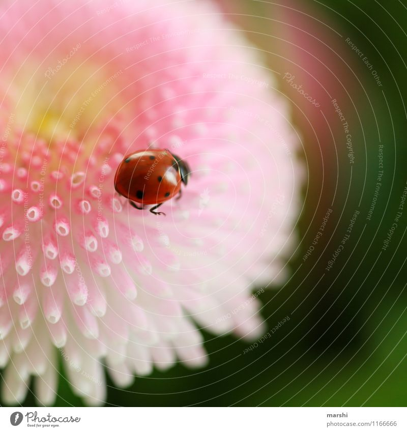 Nature Plant Flower Animal Happy Moody Point Desire Daisy Beetle Ladybird