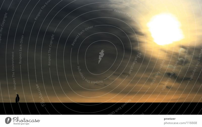 crow Bird Crow Clouds Black Eerie Fear Panic Winter Sky Sun Silhouette Sunset