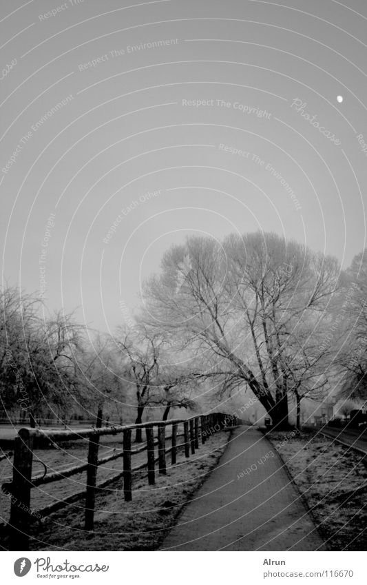 Sky Tree Winter Cold Gray Lanes & trails Frost Moon Fence