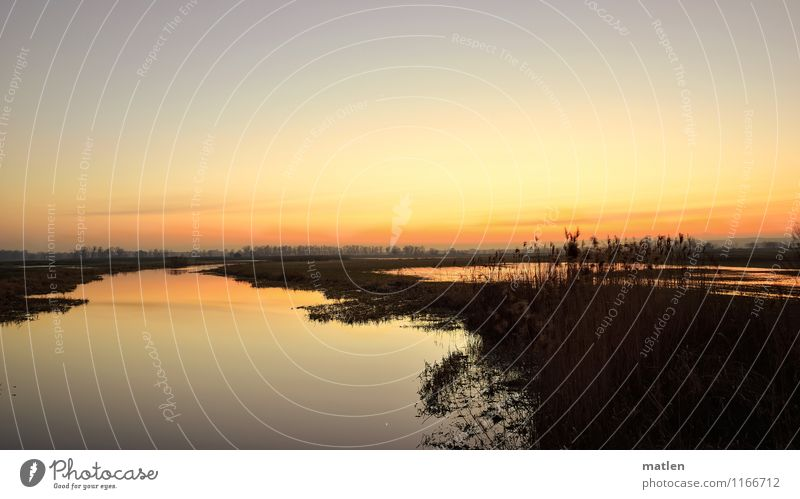 occident Landscape Plant Water Sky Sky only Cloudless sky Sunrise Sunset Spring Weather Beautiful weather Grass Meadow Coast River bank Deserted Natural Brown