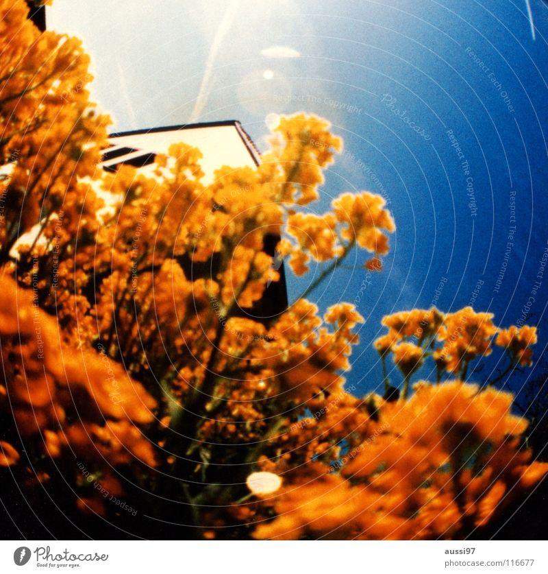 sight Flower Flashy Fisheye Round Thorough Roof Shaft of light Vapor trail Sunlight Holga Summer Macro (Extreme close-up) Close-up sea of plants Lens Lomography