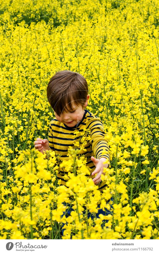 In the rape field Masculine Child Boy (child) Hair and hairstyles 1 Human being 3 - 8 years Infancy Nature Plant Spring Agricultural crop Canola