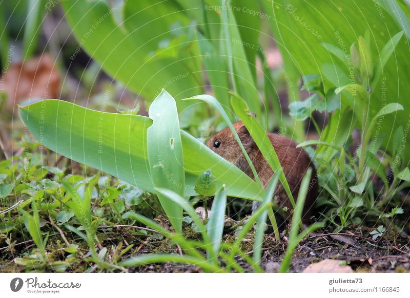 Muffin, muffin come out! Environment Nature Animal Earth Spring Summer Autumn Plant Grass Leaf Foliage plant Garden Park Meadow Wild animal Mouse Pelt