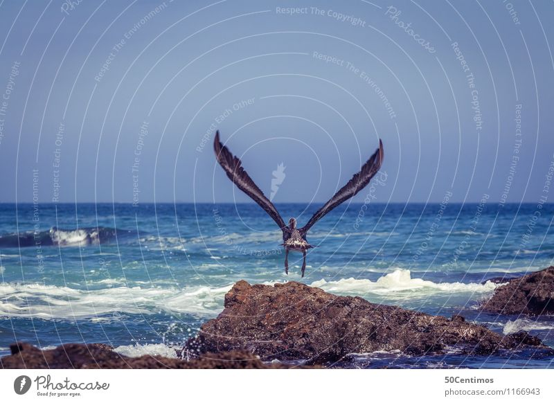 Nature Summer Sun Ocean Landscape Animal Far-off places Environment Coast Freedom Flying Bird Lifestyle Waves Wild animal