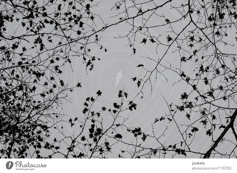 Tree Winter Landscape Dark Cold Autumn Fear Fog End Beech tree Deciduous tree