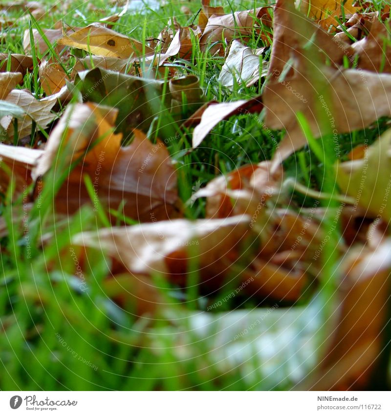 autumn foliage Autumn Leaf Green Brown Red Brownish Park Meadow Grass Blade of grass Muddled Multicoloured Mixture October Worm's-eye view Early fall To dry up