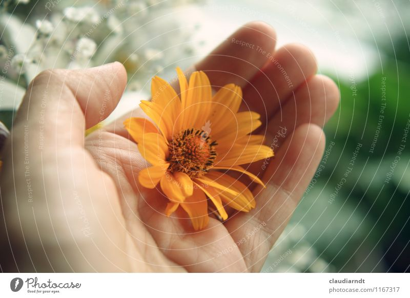 Human being Plant Beautiful Green Flower Hand Yellow Love Blossom Happy Orange Birthday Gift To hold on Bouquet Donate